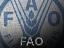 iconos_informacion_fao